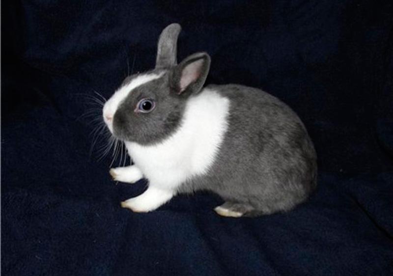Сколько лет живут кролики - декоративные и обычные в домашних